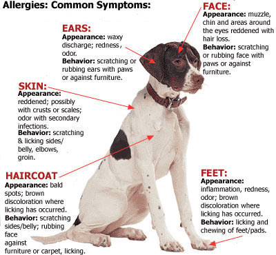 dog seasonal allergies symptoms