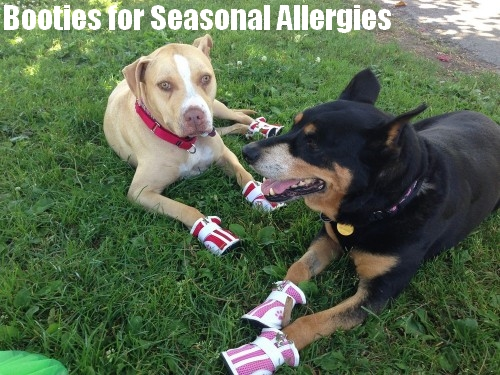 dogs wearing sneakers in the grass to prevent seasonal allergies