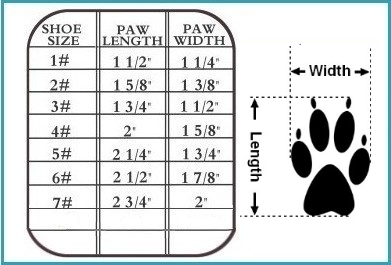 dog sneaker size Chart