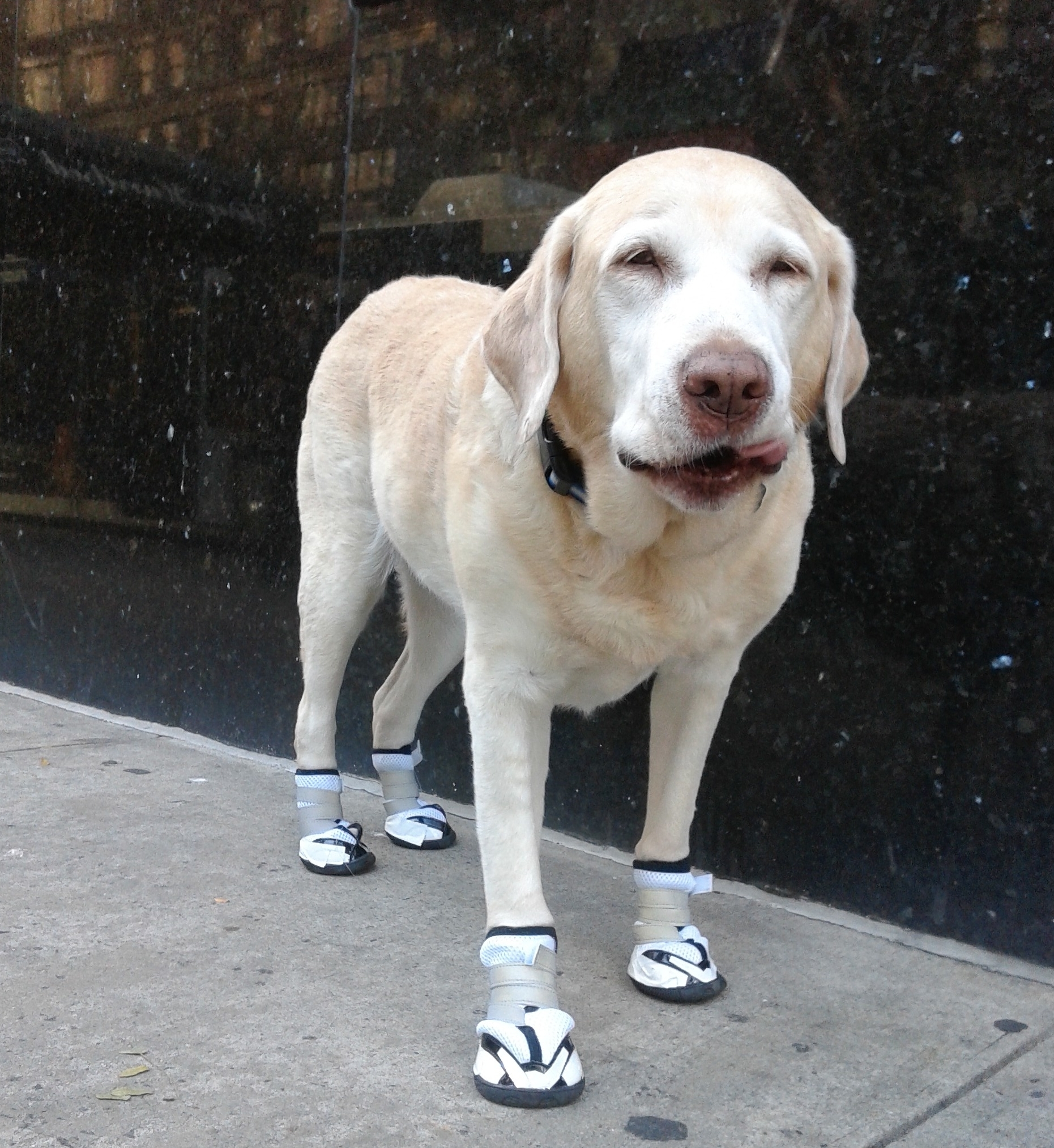 Non-slip & orthopedic dog boots