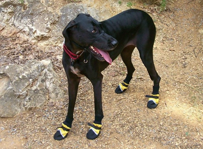 dog wearing yellow reflective boots
