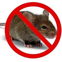 Мышь стоп