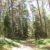 в центре лесопарка самые старые и красивые деревья