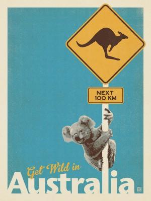 Australia: Get Wild, Koala