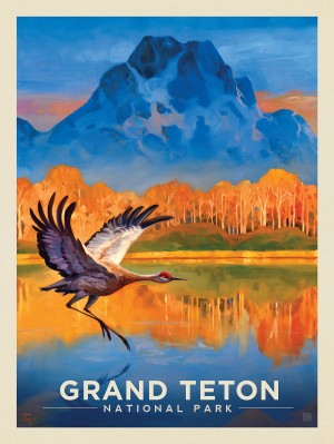 Grand Teton National Park: Sand Hill Crane