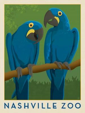 Nashville Zoo (Macaws)