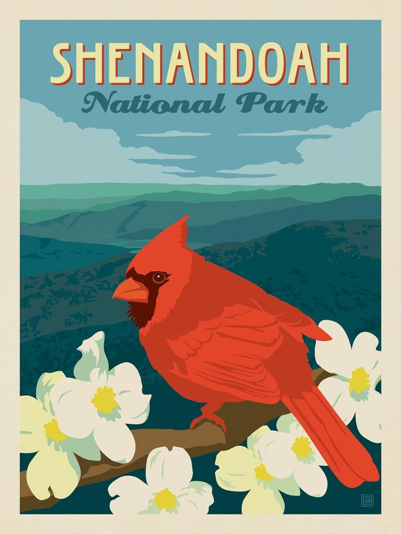 Shenandoah National Park: Cardinal On Dogwood