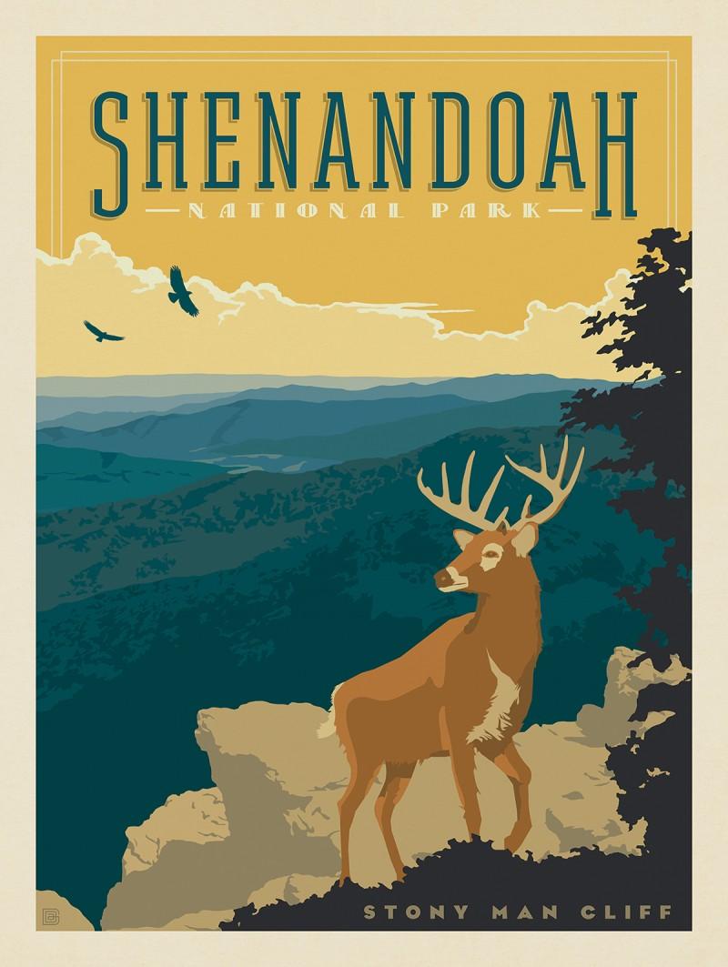 Shenandoah National Park: Deer