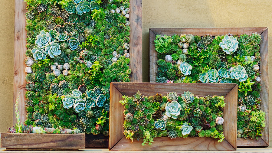 Live Succulent Picture In Winter Park March Adjectives Market