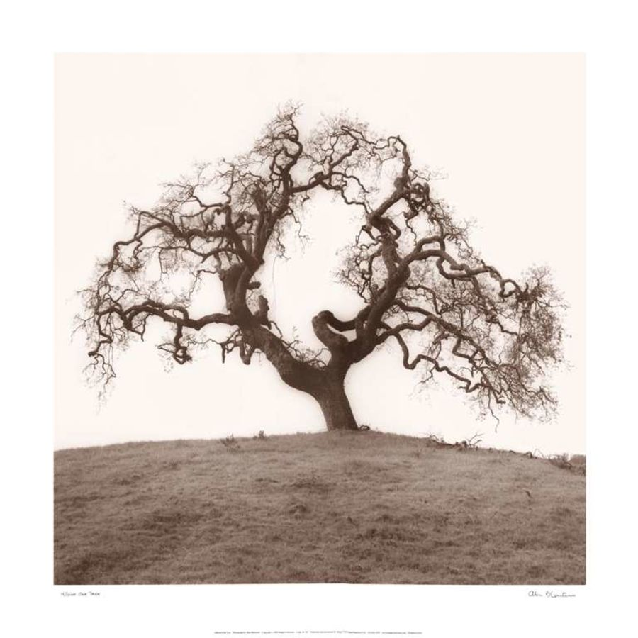 Summer Tree size - 24x24In