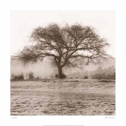 The Tree 2 size - 24x24In art print by AdroitArt