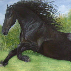 Black Beauty size - 22x12In - 22x12