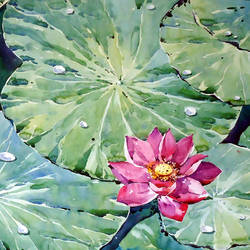LOTUS size - 21x15In - 21x15
