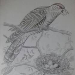 Bird  size - 36x26In - 36x26