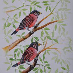 Birds painting 15 size - 9x13.5In - 9x13.5