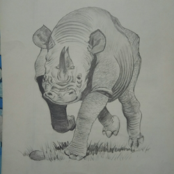 Rhinoceros size - 8x11In - 8x11