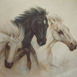 black and white horse size - 36x24In - 36x24