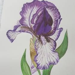 Blooming purple flower  size - 5.8x8.2In - 5.8x8.2
