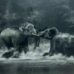 Elephant size - 20x26In - 20x26