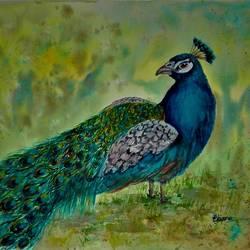 Peacock Bird size - 20x16In - 20x16