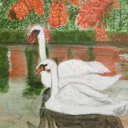 pair of swans size - 16x12In - 16x12