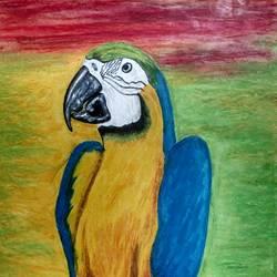 Macaw size - 8.3x11.7In - 8.3x11.7