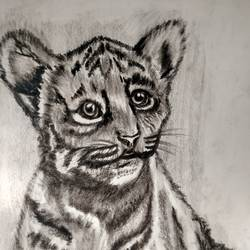 Sketch of tiger's cub size - 8.3x11.7In - 8.3x11.7