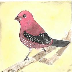 Strawberry Finch size - 5.8x5.8In - 5.8x5.8