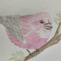 Rose Finch size - 12x8In - 12x8