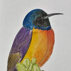 Regal Sunbird size - 8x12In - 8x12