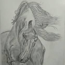 Beautiful Horse size - 8x11In - 8x11