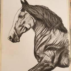 Horse size - 11x16In - 11x16