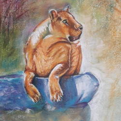 Lioness  size - 12x17In - 12x17