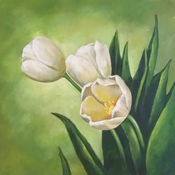 white tulips size - 24x24In - 24x24