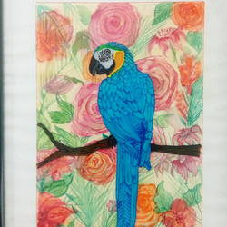 Blue MACAW size - 10x12In - 10x12