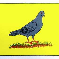Pigeon size - 11x7In - 11x7