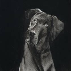 Dog charcoal sketch  size - 10x14In - 10x14