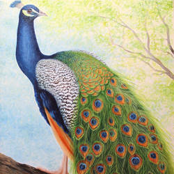 Peacock sitting on tree size - 24x36In - 24x36