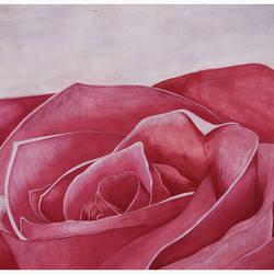 Rose Flower - 11.5x16