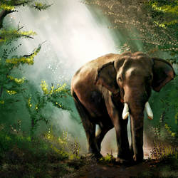 Elephant in Forest - 32x20