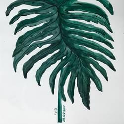 Flora and fauna  - 12x16