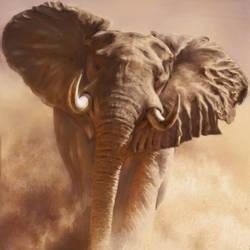 Elephant on land - 23x32