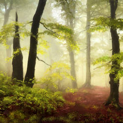 Forest in light - 30x24