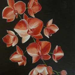 Orchids - 13x16