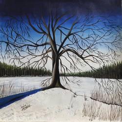 trees in snow - 18x16