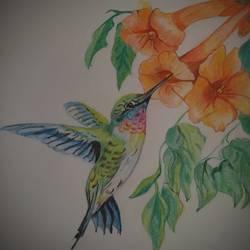 Humming birds - 8x8