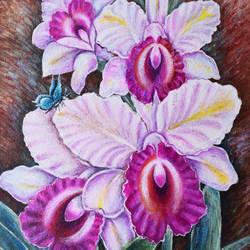 Orchids - 12x16.5