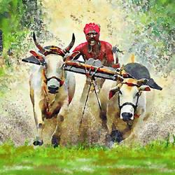 Bull cart race - 30x21