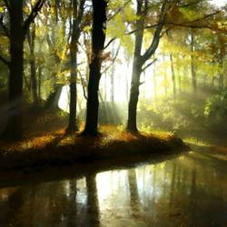 Tree lake & Sun rays - 30x20