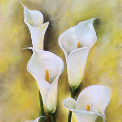 White Angels size - 20x31In - 20x31